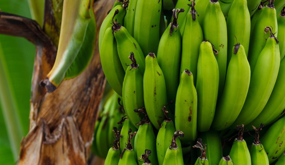 Banana Transportation