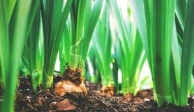 Agri Microbial Technology